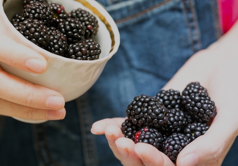 Woman's cupped palm full of blackberries