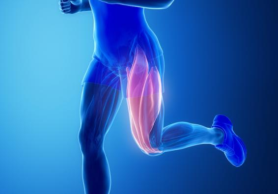 Illustration of legs showing upper leg muscles in red denoting pain