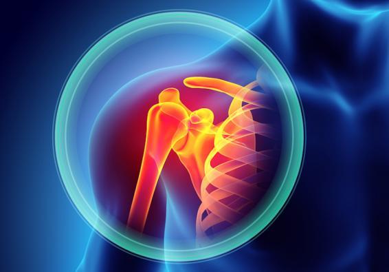 Medical illustration of shoulder