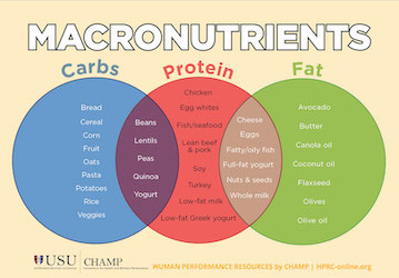 Thumbnail of Macronutrients 101 infographic